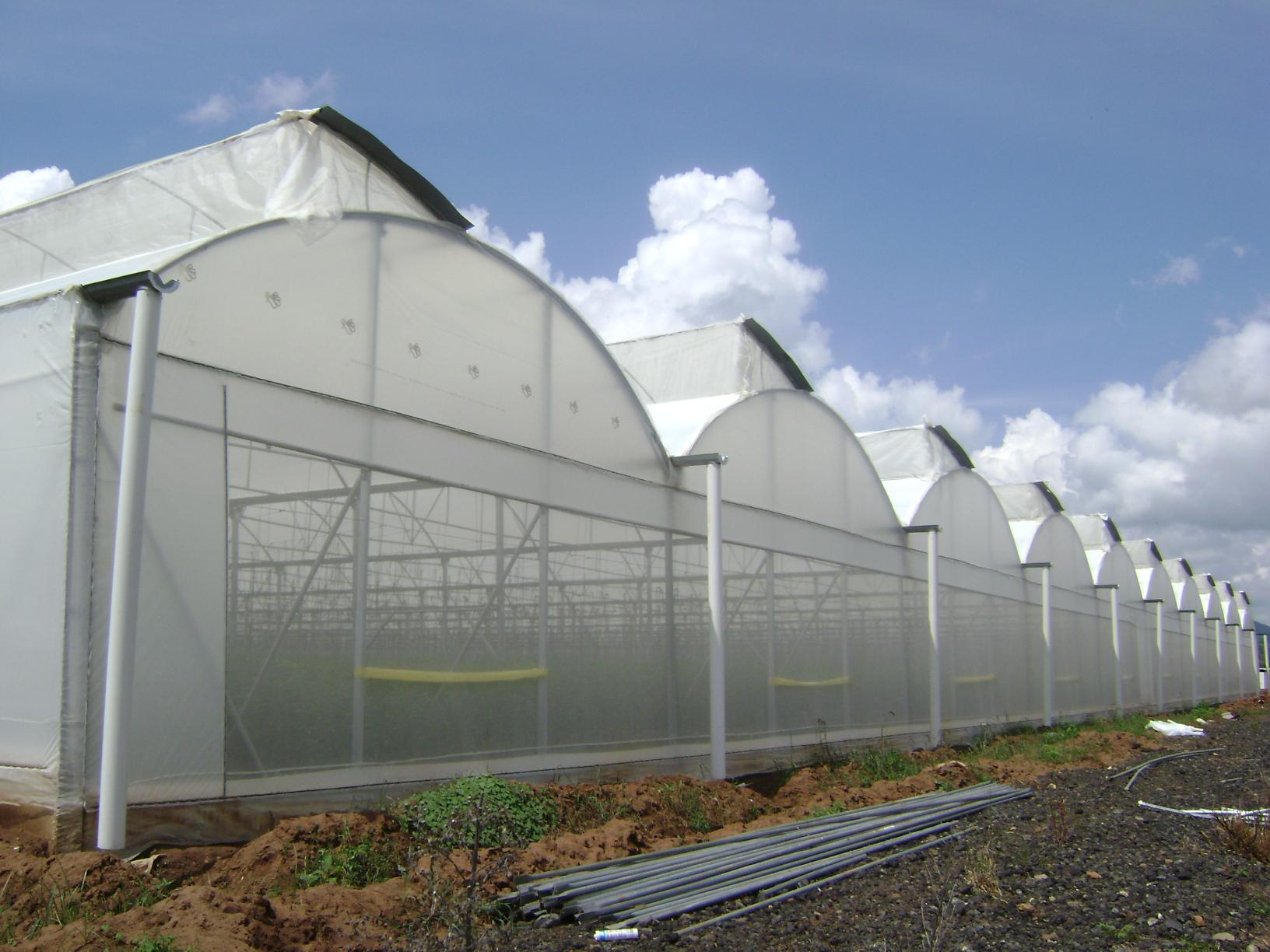 Los invernaderos for Construccion de viveros e invernaderos