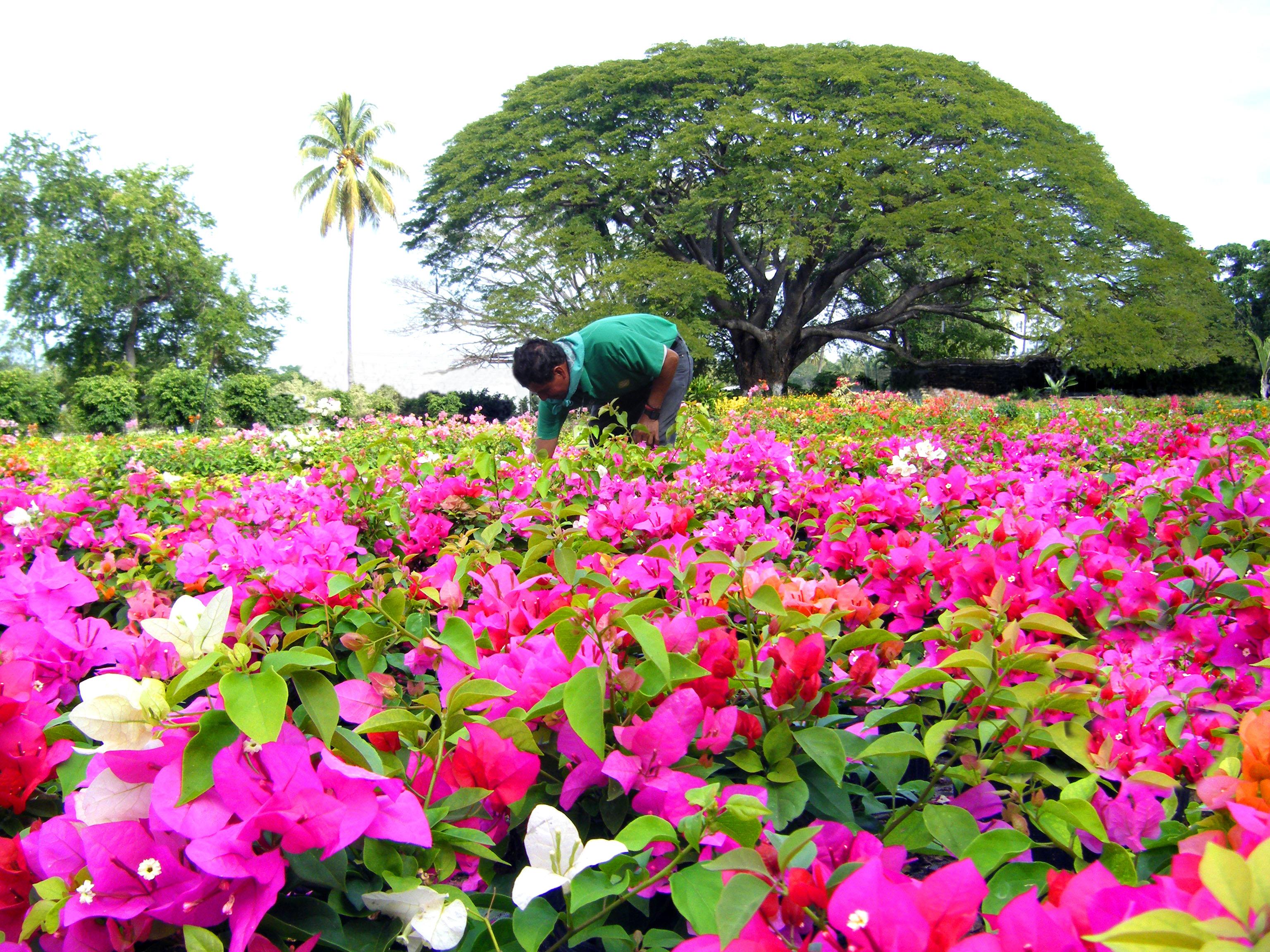Follajes tropicales de colima spr de r l de c v colima for Viveros en colima