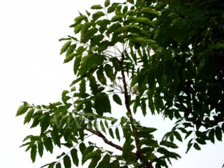 Jardiner a la encantada xochimilco for Jardineros en xochimilco
