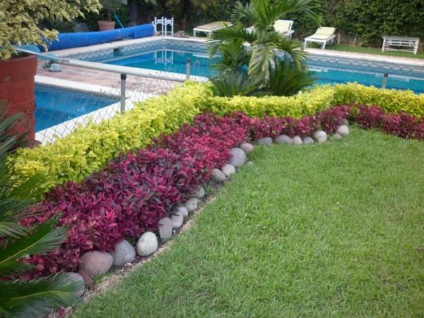 Vivero la flor de morelos cuautla morelos for Ver plantas para jardin