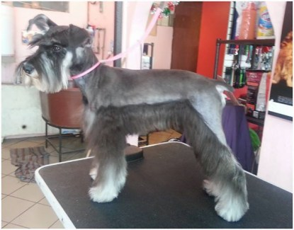 Foto de Piccola Pet Spa & Boutique