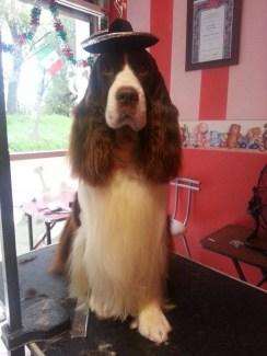 Fotos de Piccola Pet Spa & Boutique
