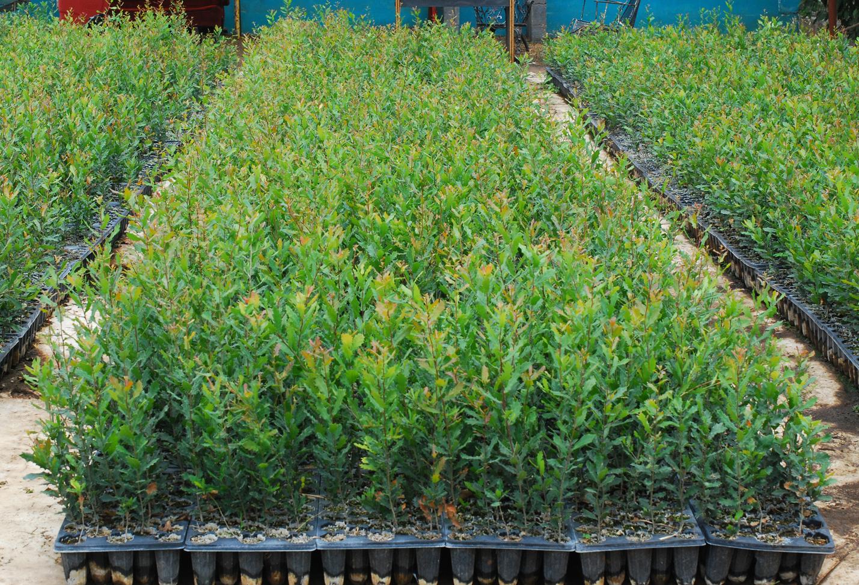 Vivero huertas encinos y mas monterrey for Jardineria monterrey